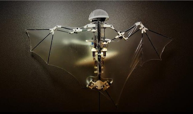 At the Californian institute the robot - a bat